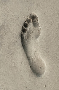 Hilton Head Footprint