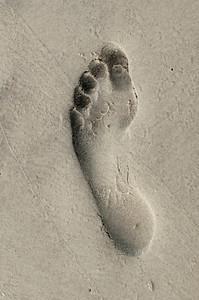 Hilton Head Footprint