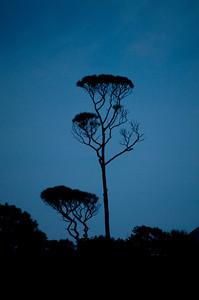 Hilton Head Tree