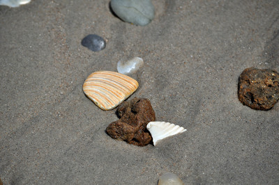 Onslow Beach Shells Stones