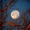 Moon in the morning<br /> Williamsburg, Virginia, USA