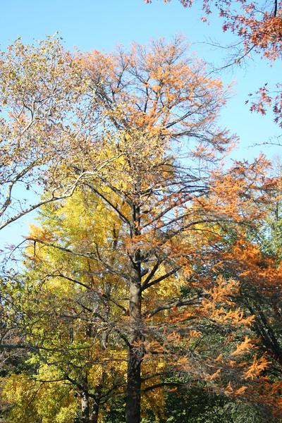 Autumn has arrived...