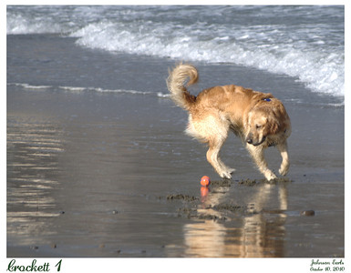 Photos of a dog named Crockett playing catch-the-ball with his owner.  Taken at Pacifica State Beach, 10 October 2010.