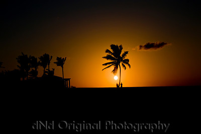 063 Bahamas 2008 Last Evening Sunset - Sunset & Tree