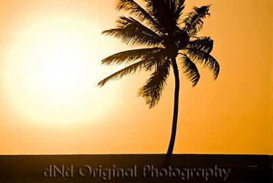 061 Bahamas 2008 Last Evening Sunset - Sunset & Palm Tree
