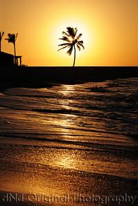 060 Bahamas 2008 Last Evening Sunset - Sunset & Palm Tree