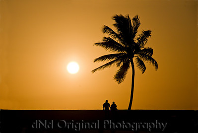062 Bahamas 2008 Last Evening Sunset - Sunset & Tree