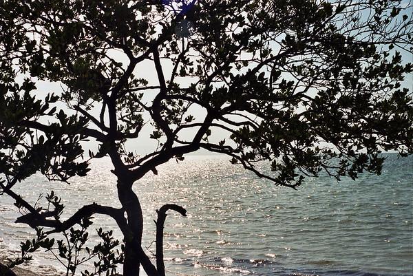 Florida Coastline - Islamorada