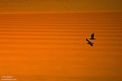 Sunrise Travelers
