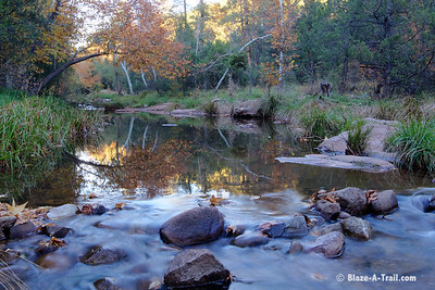 Fall colors at the East Verde River near the Mogollon Rim in Payson, AZ (Fall 2012)