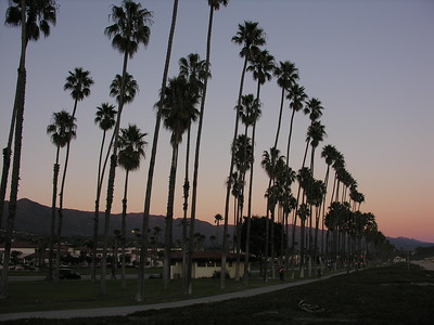 © Joseph Dougherty.  All rights reserved.   Tall fan palms stretch into the evening sky along the Santa Barbara waterfront.