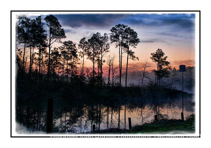 Sunrise comes to a swamp in Pensacola on a misty, foggy morning