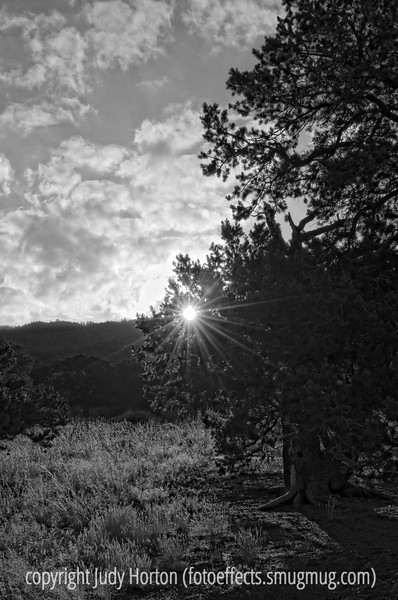 Sunrise in the Great Sand Dunes.  The sun shines through the branches of a large old pinon pine.
