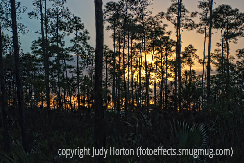 Everglades sunset