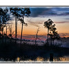 Sunrise over a swamp near Pensacola, Florida
