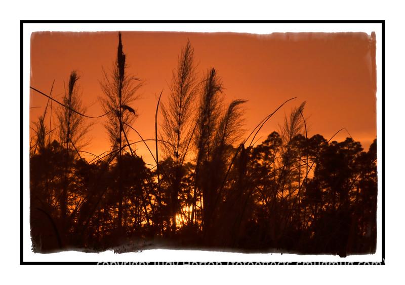 Grass at sunset in Pensacola, Florida.
