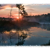 Sunrise in Pensacola over the swamp....with fog swirling around the swamp.