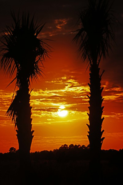 Two Palms in Red Sunset