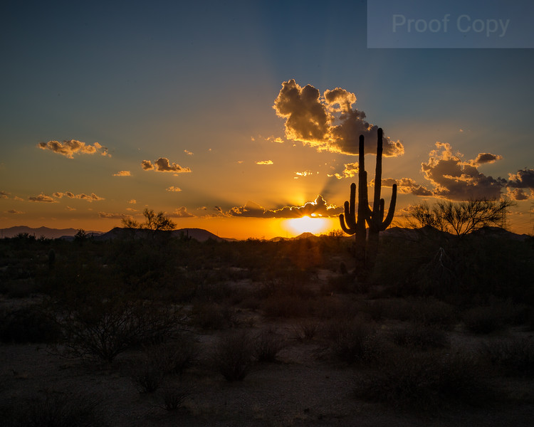 End of Day-Sonoran Sunset