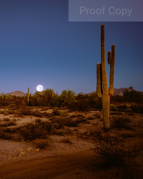 Harvest Moon Rising Over the Sonoran Desert and the McDowells