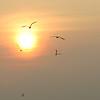 Sunset Dauphin Island, AL 2006