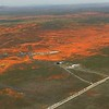This is what a superbloom looks like from the air.
