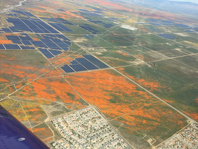 Lots of solar arrays out here and yet there are still large tracts of land just covered in poppies.