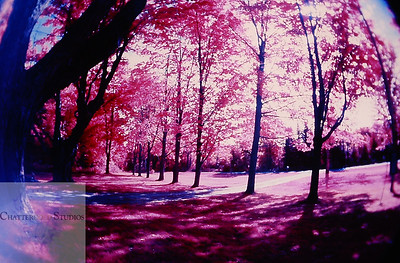 Shot with now extinct Kodak Color Infrared Film