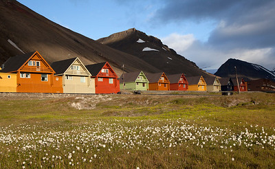 Houses and cottongrass in Longyearbyen.