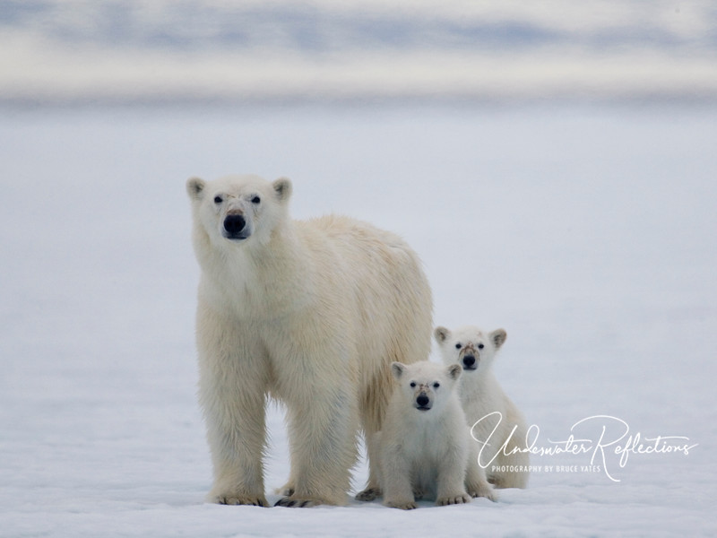Mother with two cubs