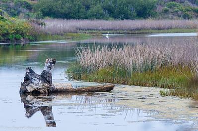 Pescadero Marsh
