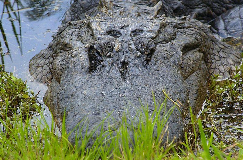 Okefenokee Swamp pics.