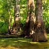 Swamp-9515a