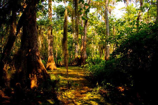 Swamps in Louisiana ~ Honey Island