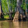 Swamp-9542a