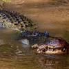 Swamp-9604a