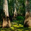 Swamp-9512a