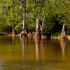 Swamp-9565a