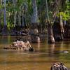Swamp-9587a