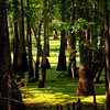 Swamp-9496a