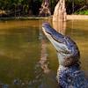 Swamp-9577a