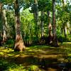 Swamp-9510a