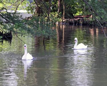 Swan Lake Sumter SC