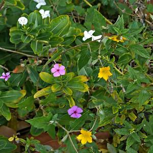 Wildflowers (April 7, 2012)