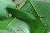 Leaf Me Alone: