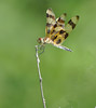 Dragonfly Perch