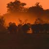 Buffalo Haze: The setting sun bathes a herd of Cape Buffalo in a haze of dusty glory.  Location - Hwange National Park, Zimbabwe, Africa.