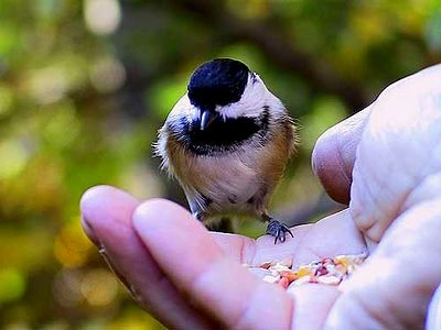 CHICKADEE IN MY HAND IS BETTER THEN TWO IN THE BUSH
