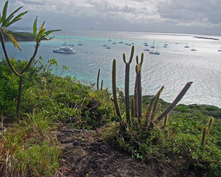 2017_ Tobago Cays_ Grenadines_IMG_1565