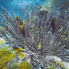 2017_ soft corals_Bequia_Grenadines_IMG_1847